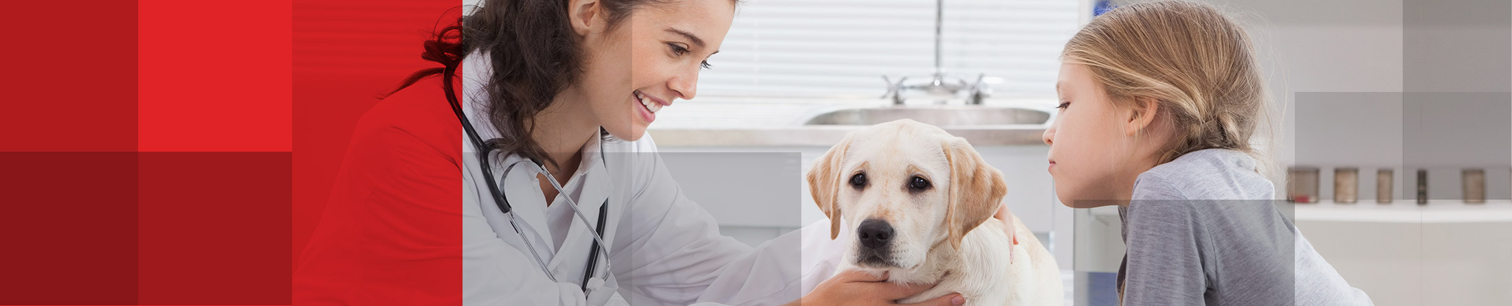 Veterinary, animal nutrition, medical supplies and equipment to veterinary practices